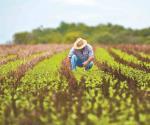 Ciencia y tecnología para fortalecer seguridad alimentaria: Sader