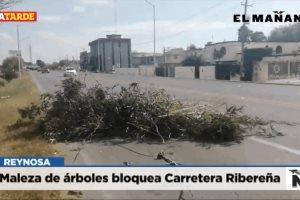 Maleza de árboles bloquea Carretera Ribereña