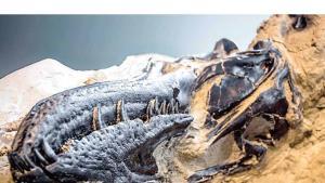 Descubren el primer esqueleto completo de Tiranosaurio Rex