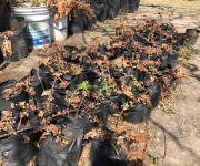 Daña aguanieve plantas del vivero municipal