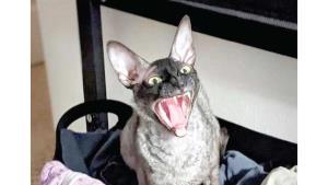 Exorcista asegura que este gato debería ser exorcizado