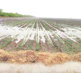 De plácemes el sector agrícola