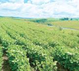 Joven agricultor cumplió su sueño de comprar 40 hectáreas de terreno