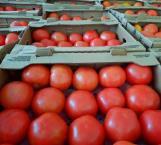 Reparten tomate a familias vulnerables