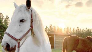 Llevan a Japón miles de caballos para consumo