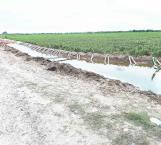 Peligra segundo riego agrícola