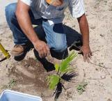 Aceleran reforestación ante sequía severa