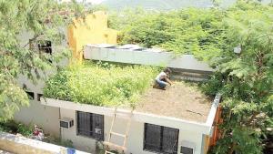 Crean mexicanos techos ecológicos