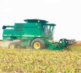Baja la producción de sorgo por sequía