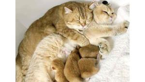 Amor de madre existe en todas las especies
