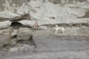 Dron capta en video a perritos atrapados en socavón de Puebla