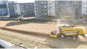 Polaco se negó a vender su terreno y hoy cosecha sus cultivos entre edificios