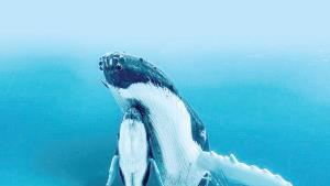 Captan a mamá ballena nadando junto a su cría