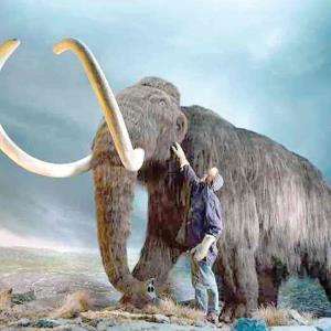 Quieren revivir a extinto mamut para combatir el cambio climático