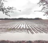 Mejoran las lluvias desarrollo de cultivos