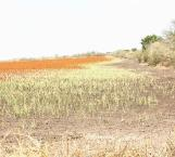Contamina salitre 80 mil hectáreas