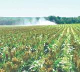 Plagas de gusanos acechan los cultivos